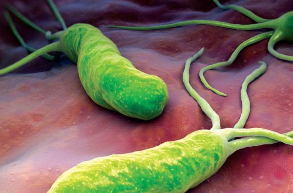 descubren el mecanismo de adaptacioacuten de helicobacter pylori