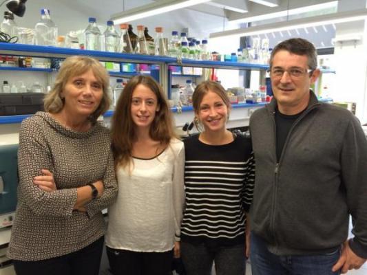 descubren un mecanismo molecular que activa la regeneracioacuten de los tejidos celulares