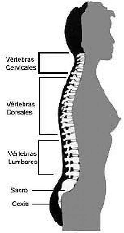 la estenosis de canal lumbar es la cirugaa mas coman en mayores de 65 aaos