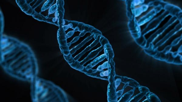 un estudio vincula geneacuteticamente inteligencia y salud