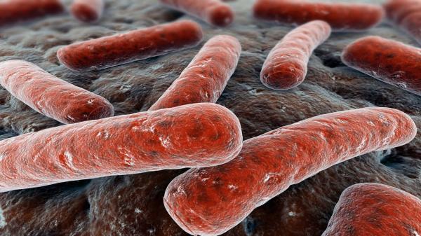 identifican una nueva viacutea de transmisioacuten de la tuberculosis