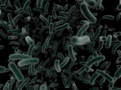 las lesiones en el estmago atraen a la bacteria helicobacter pylori