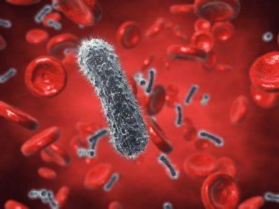 el ministerio de sanidad prev incorporar nuevos medicamentos contra la hepatitis c en 2015