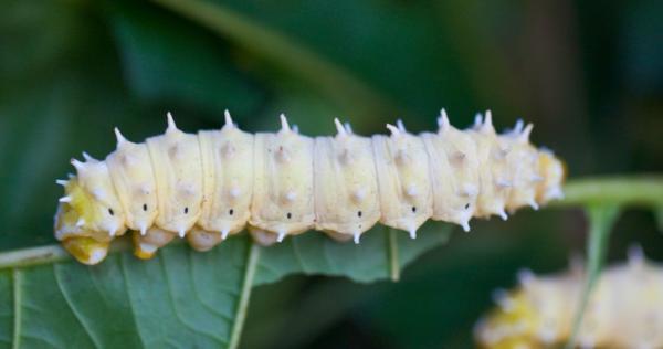 un modelo experimental en un gusano mejoraraacute el tratamiento de las arritmias