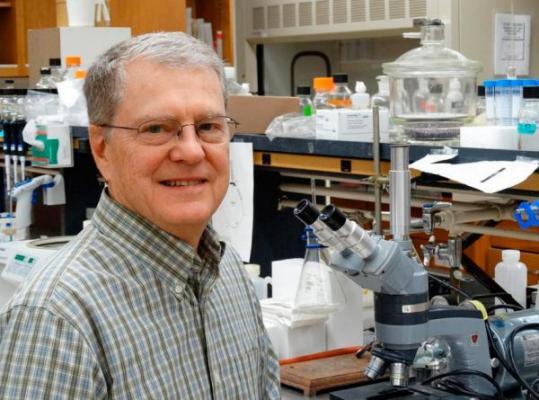 una moleacutecula muestra la capacidad de contrarrestar la resistencia geneacutetica de patoacutegenos a los antibioacuteticos