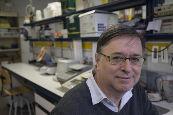 moleacuteculas endocrinas liberadas por la grasa parda podriacutean ayudar a descubrir terapias contra la obesidad