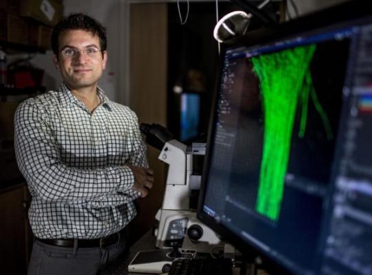 nueva generacioacuten de motores de adn para el diagnoacutestico molecular