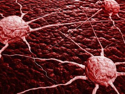 una protena de supervivencia se perfila como el nuevo objetivo para tratar el cncer