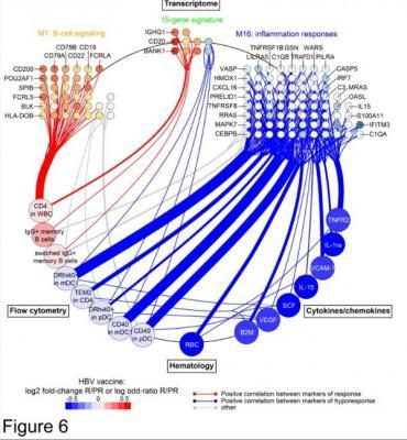 la relacioacuten entre la respuesta a la vacuna contra la hepatitis b y la inflamacioacuten
