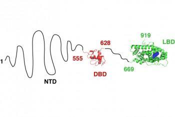 revelan-el-potencial-oculto-de-las-proteinas-desordenadas